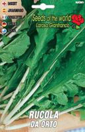 Vendita sementi aromatici online aneto borraggine for Acquisto piantine da orto online
